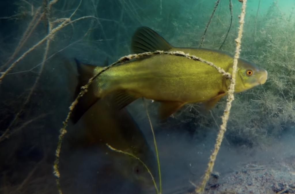 гидроперид для рыбалки